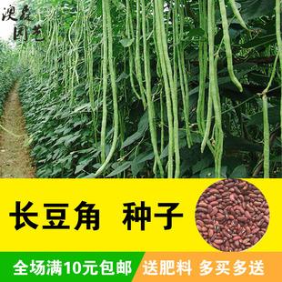 春播 豆长豆角眉豆菜种籽春豇豆种子无架豆散装 蔬菜种子菜籽种四季