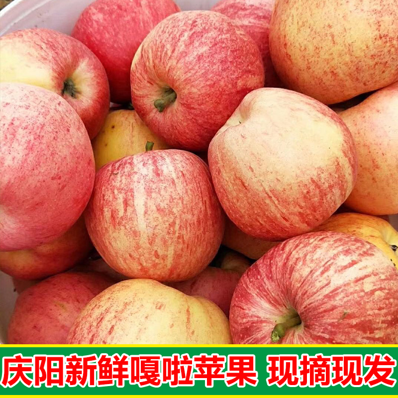 Qingyang is picking early Fuji apple and fruit fresh in the season, 11 Jin in a box, crisp and sweet with luggage, not produced in Shaanxi Province