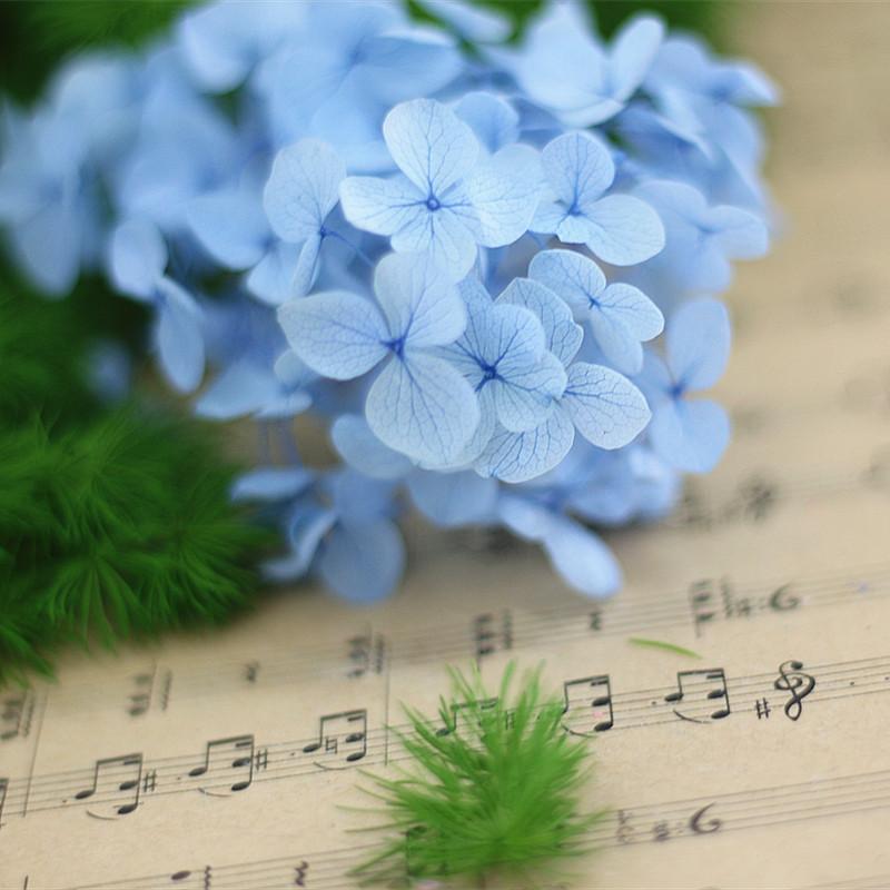 永生花花材安娜小叶绣球花材料礼盒玻璃罩制作永生花 diy礼物送人