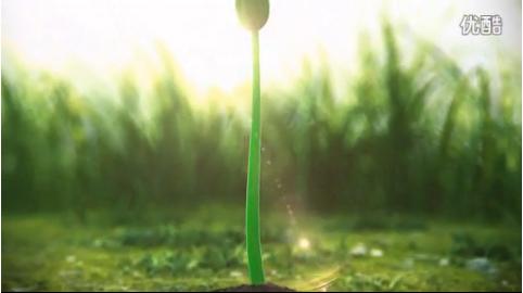 介绍种子从发芽到开花的整个动态过程 AE片头模板动画视频素材-视频素材-sucai.tv