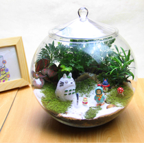 Moss Micro landscape Dragon Cat Ecological Bottle Office Creative potted Plant (snow) Birthday present