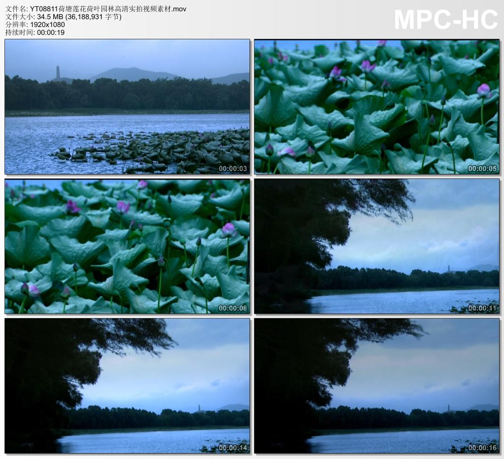 荷塘莲花荷叶园林高清实拍视频素材