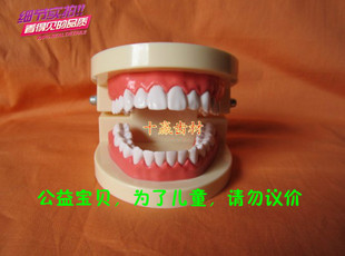 Preschool children brush their teeth model dental teaching model teaching Kindergarten send toothbrush to brush your teeth model