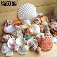 Природный оболочка раковина коралловый аквариум декоративный товары фотография реквизит ремесла статья микро пейзаж средиземноморье морская звезда украшение