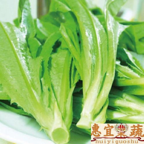 油麦菜 新鲜莜麦菜 苦菜 生菜 沙拉配料 低热量 高营养 惠宜果蔬