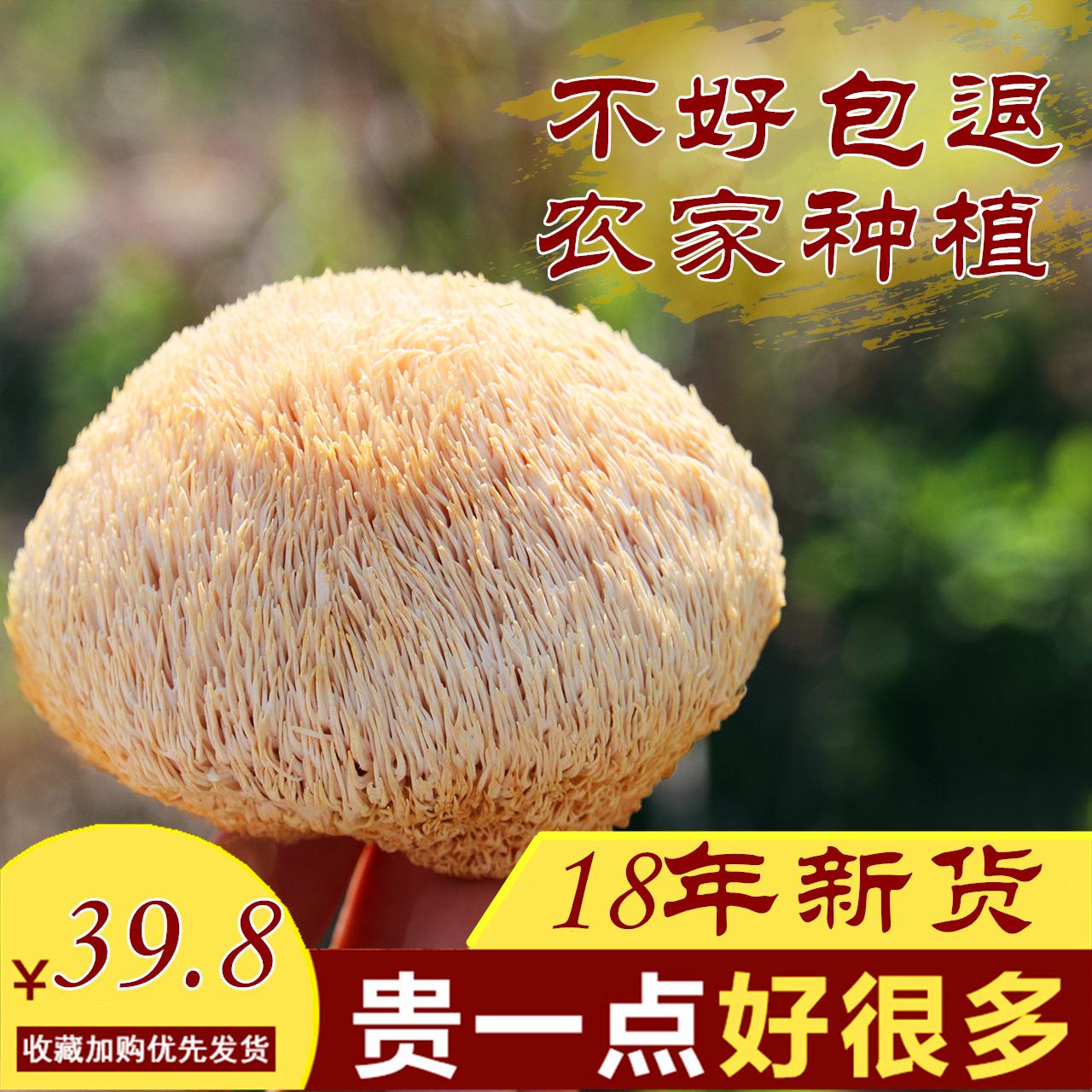 猴头菇 农家自产野生猴头菇干货新非新鲜特级养胃粉250g