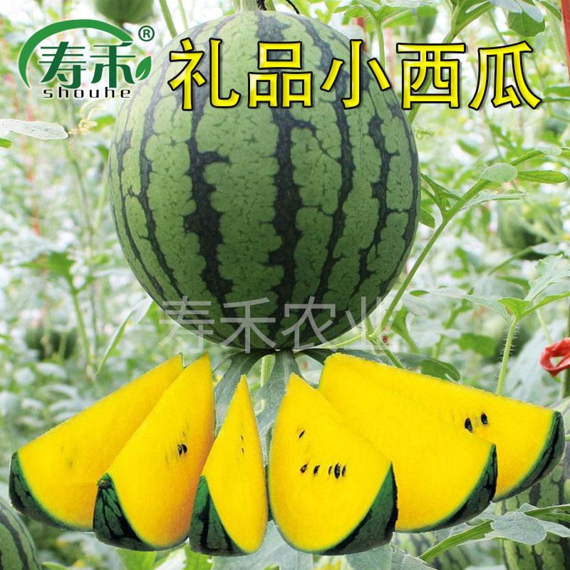 蔬菜瓜果种子