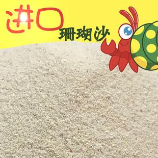 包寄居蟹活体专用沙已消毒直接使用 500g 宠物用品菲律宾细珊瑚沙