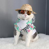 Сельское хозяйство муж против кот соломенная шляпа домашнее животное кот статьи весна небольшой тип молодой собака затенение крышка тедди собака аксессуары шляпа