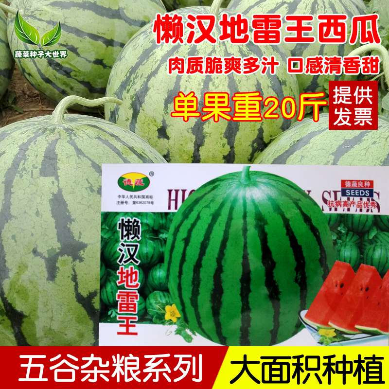 Lazy land mine big fruit sweet watermelon seed high yield early maturing juicy seedless watermelon seed large area planting