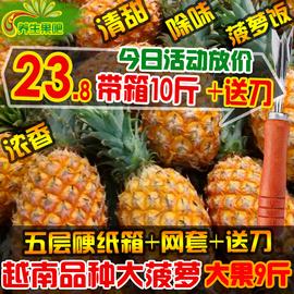 新鲜大菠萝香水菠萝手撕菠萝广西大菠萝水果pk泰国菠送刀多省包邮图片