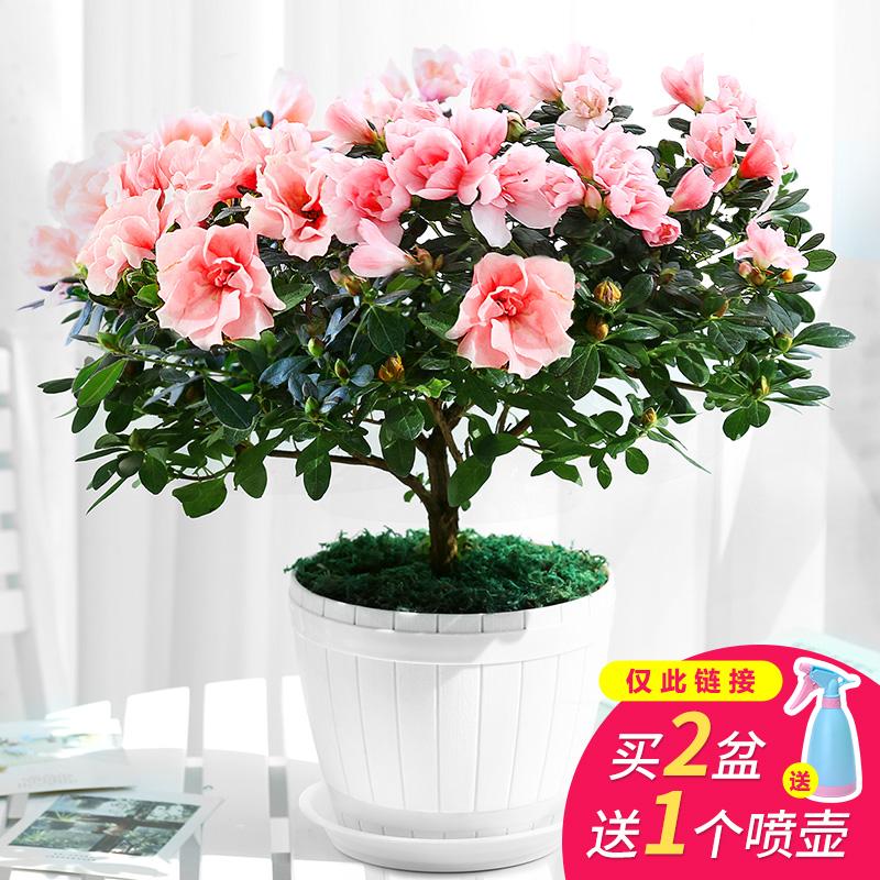 花卉�畏蒋�疾�C萃