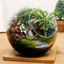 Moss Micro landscape small potted plant ecological bottle mini potted DIY dragon Cat gift pendant glass potted plant