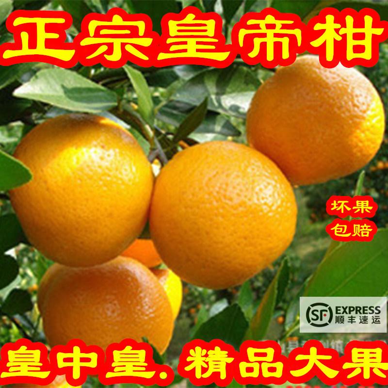 正宗广东德庆薄皮皇帝柑贡柑新鲜10斤精品大果孕妇水果桔子黄帝