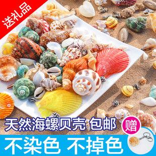 天然贝壳海螺壳海星珊瑚鱼缸造景手工diy风铃漂流瓶寄居蟹替换壳