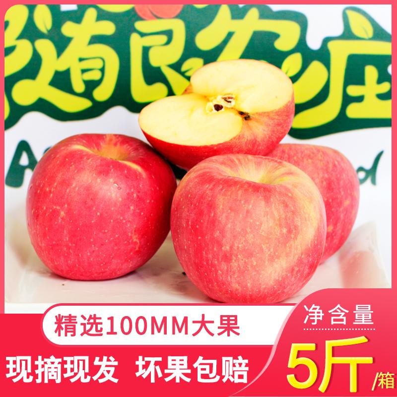红富士烟台苹果现摘现发新鲜孕妇水果直径100MM产地直达大果五斤