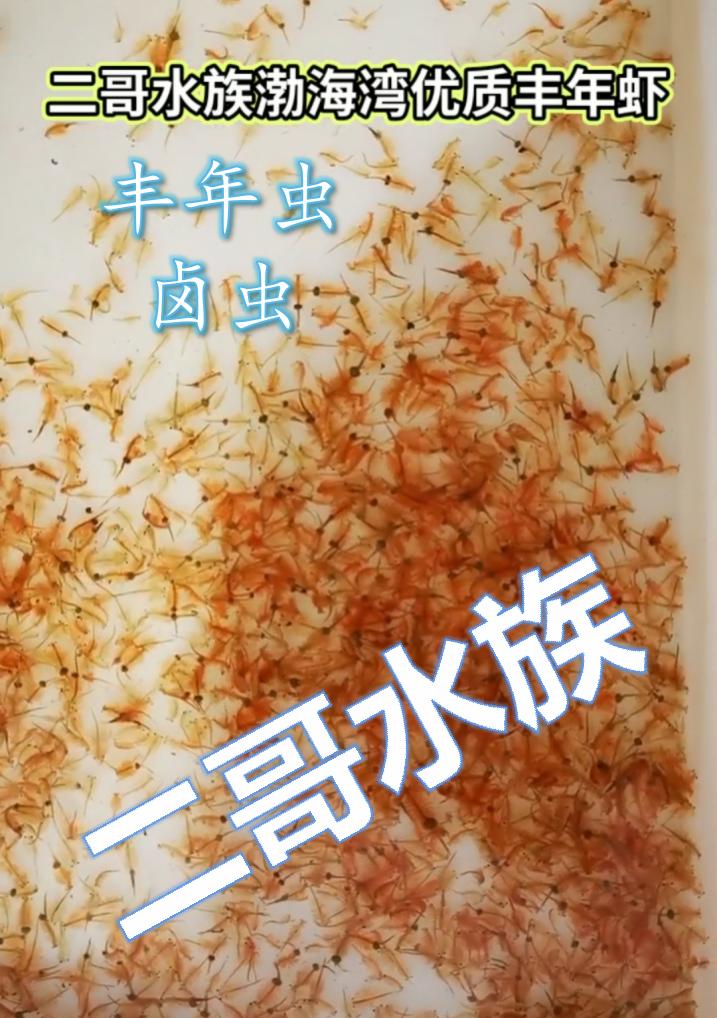 二哥水族渤海湾冰冻丰年虫丰年虾