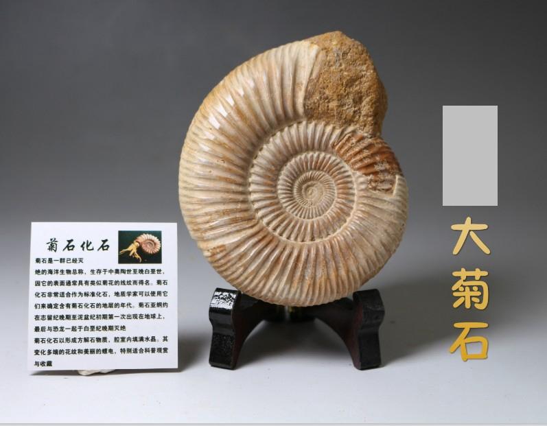 Ископаемые Артикул 524593384982