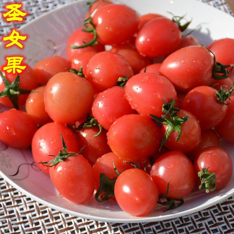 密云农家圣女果樱桃小西红柿千禧小番茄春桃新鲜水果蔬菜现摘500g