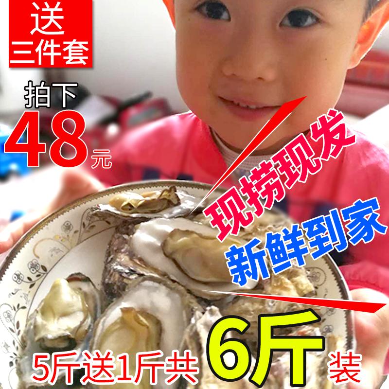 6斤装现捞乳山野生鲜活新鲜牡蛎限1000张券