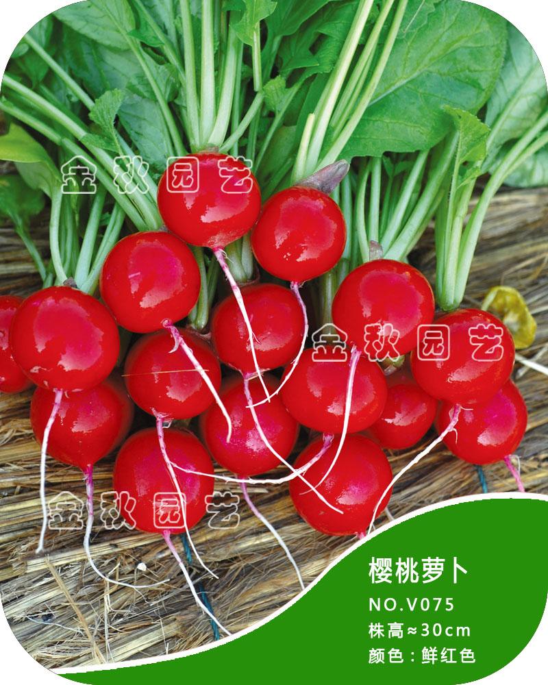 蔬菜种子萝卜樱桃萝卜种子满堂红萝卜白皮红心家阳台盆栽种菜种子