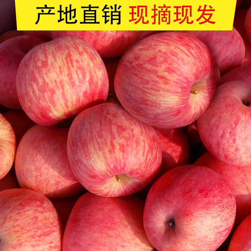 Yantai apple fruit red Fuji fresh, sweet, crisp and ugly apple in season