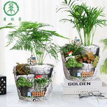 Micro Landscape Plant mini small potted bonsai Ecological Landscape Creative Plant Office DIY Wenzhu potted plants