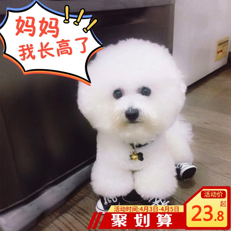 小狗狗鞋子夏季脚套泰迪比熊春秋宠物小型中型犬防水雨鞋不掉四季
