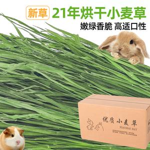 21年烘干小麦草干草兔子荷兰猪龙猫豚鼠牧草粮食饲料草毛重1000g