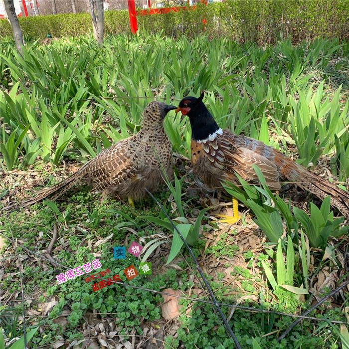 仿真竹鸡教学演示道具园林摆件装饰影视拍摄道具羽毛山鸡假鸡模型