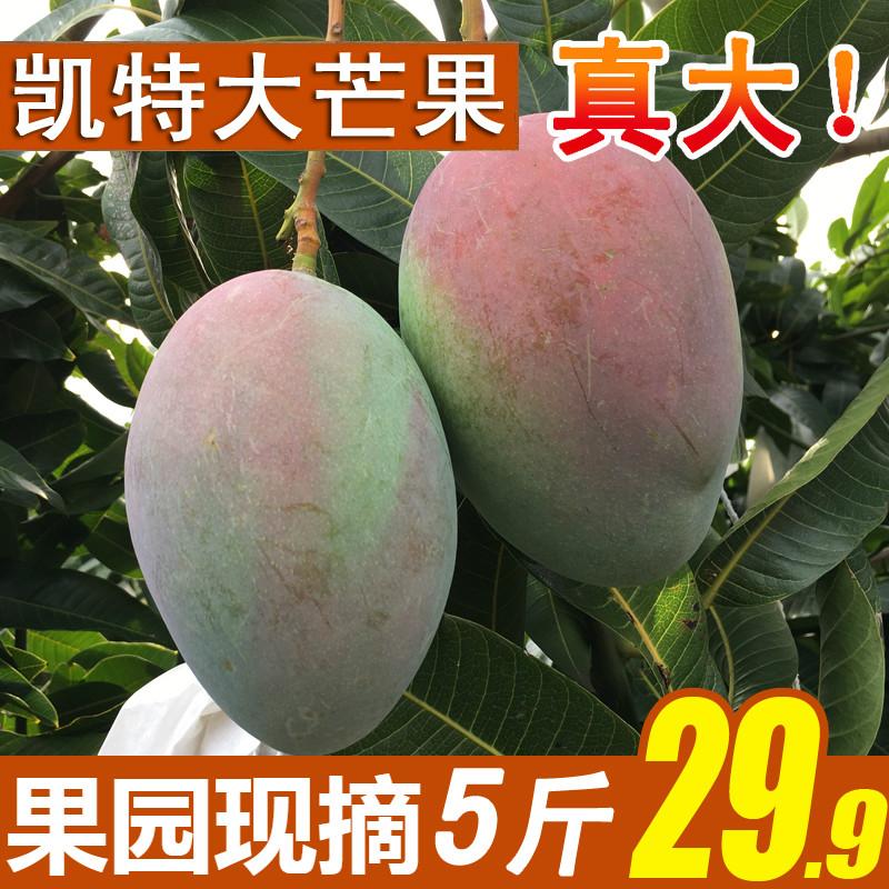 5斤��季四川攀枝花�P特大芒果新�r水果大青芒��箱10包�]