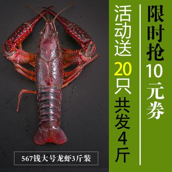 小龙虾鲜活大龙虾3斤装送1斤567钱大号红龙虾活体活虾特大包邮