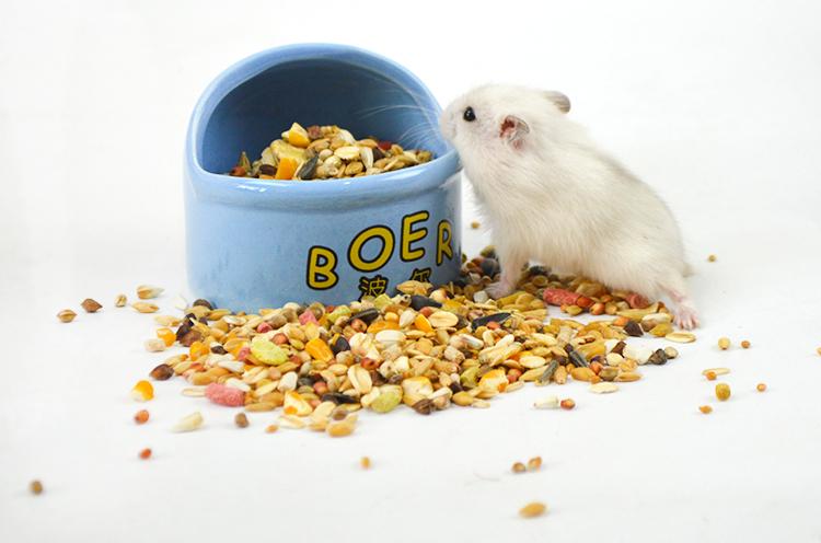 [喜琪洋洋饲料,零食]仓鼠粮食磨牙用品自配主粮营养饲料套餐yabo22887件仅售9元