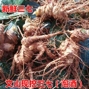 新鲜三七泡酒云南文山特级500g野生正品田七花茶头根37种子叶食用