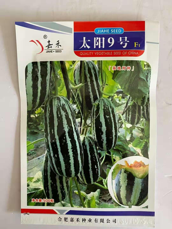 嘉禾太阳9号薄皮杂交甜瓜种子厚肉黄绿色果肉酥瓜种籽酥脆香甜
