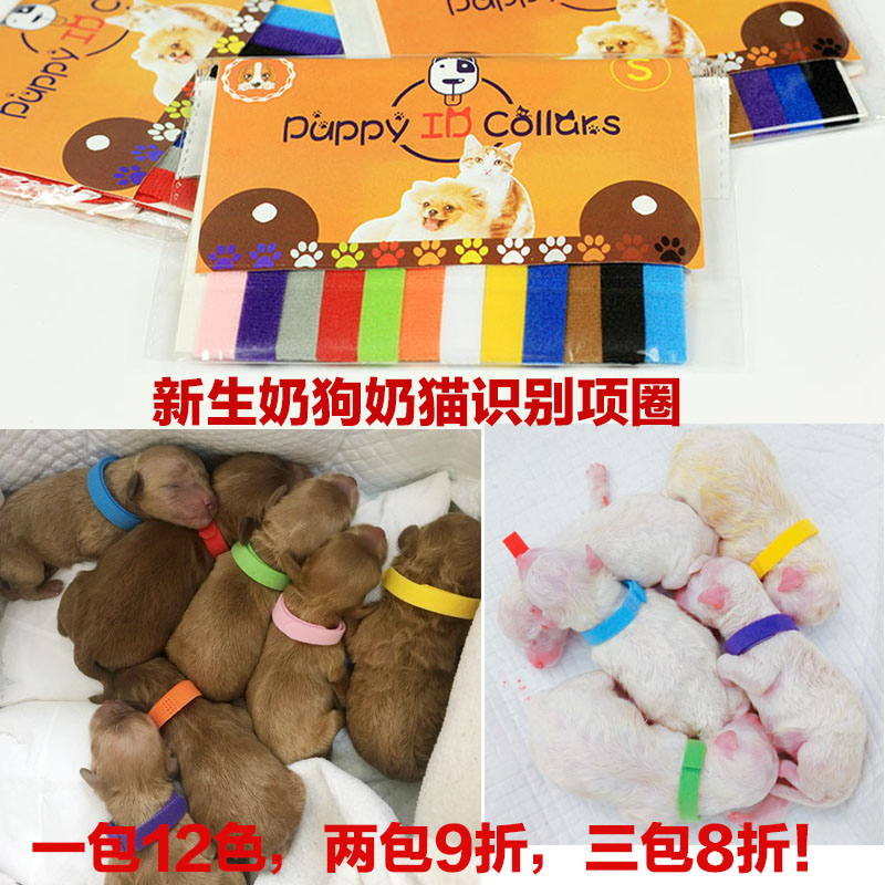 Dog identification belt identification collar new identity identification puppy kitten cat collar small large dog pet products