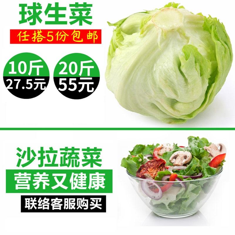 球生菜500g 新鲜蔬菜西餐汉堡专用沙拉食材球形圆型西生菜5斤包邮