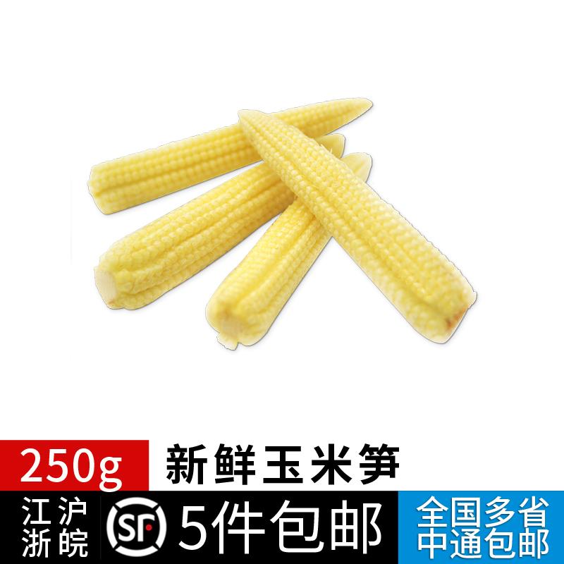 玉米笋250g新鲜蔬菜本地迷你小甜玉米芯番麦笋 江浙沪皖5件包邮