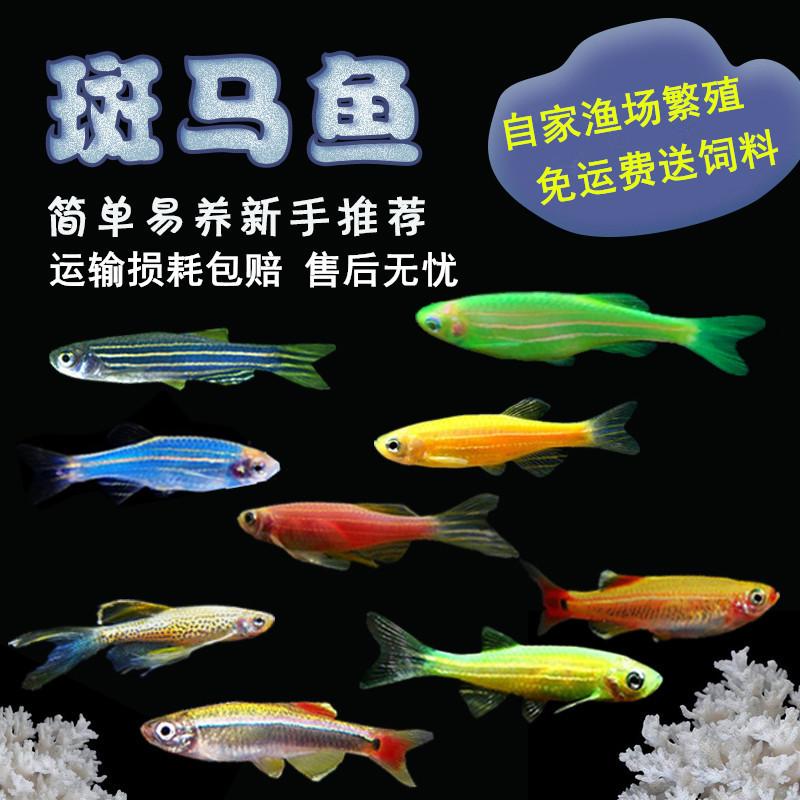 Рыбы Артикул 44259091647