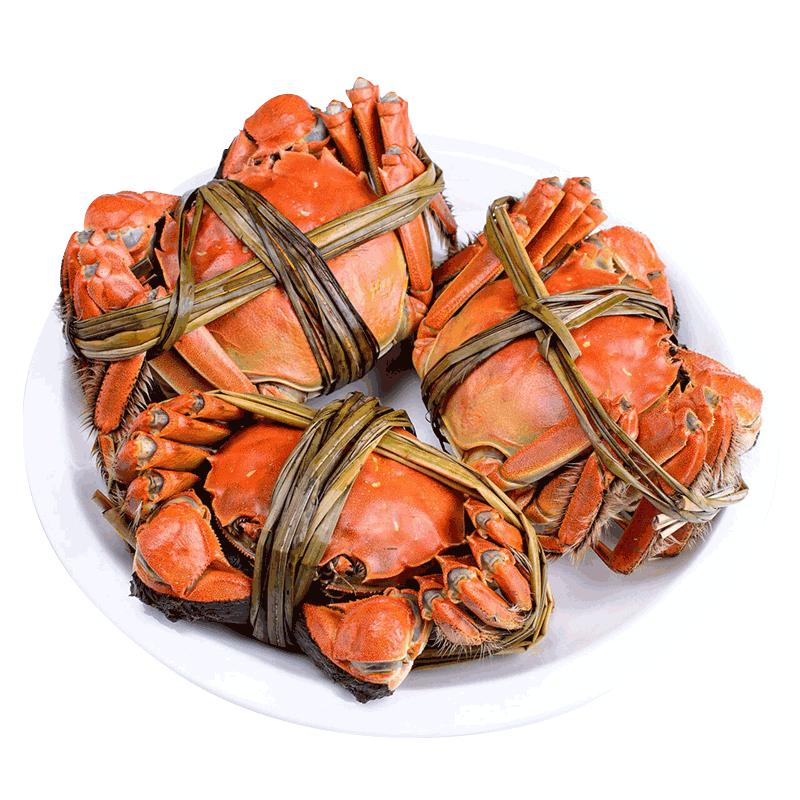 龚氏阳澄湖大闸蟹 公4.0两母2.8两 8只 鲜活螃蟹现货礼盒