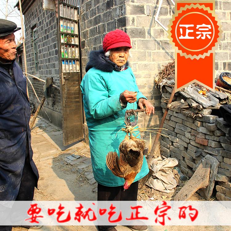 正宗农家散养2年老母鸡苏北草鸡