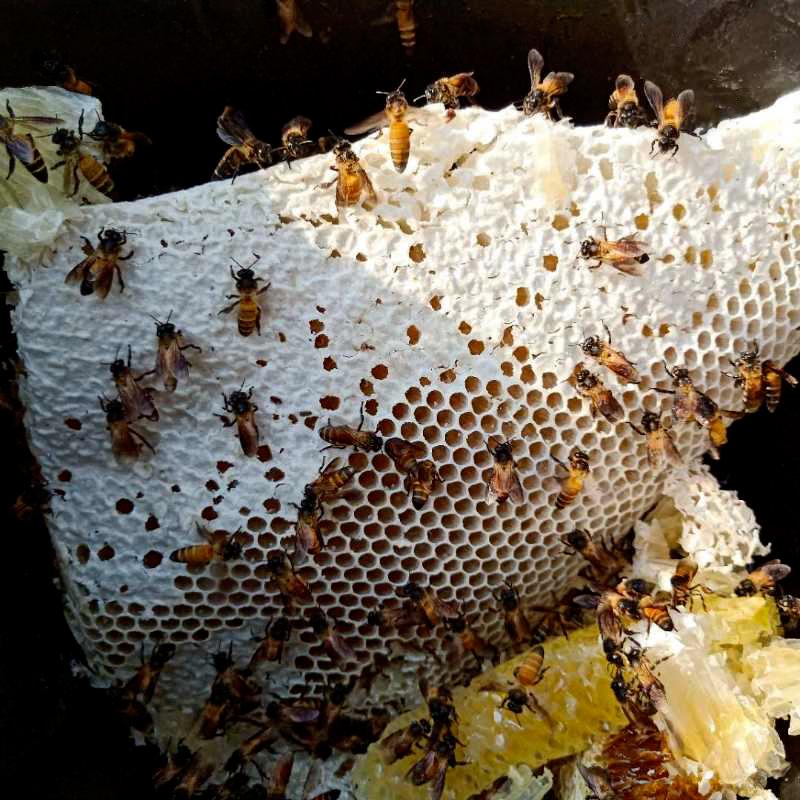 西双版纳 雨林蜂蜜 木桶蜜 一斤装 花香浓郁的百花蜜 健康又营养