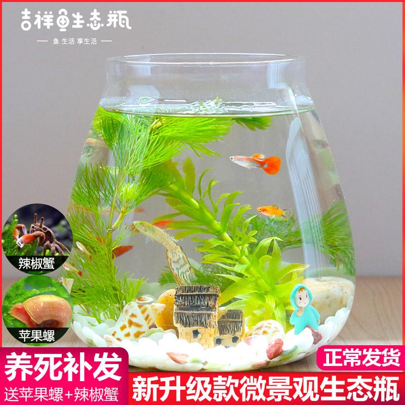生态瓶鱼微景观免换桌面景观小鱼水族办公室客厅创意造景小鱼缸鱼