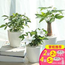 【懒人园艺】室内盆栽绿萝发财树