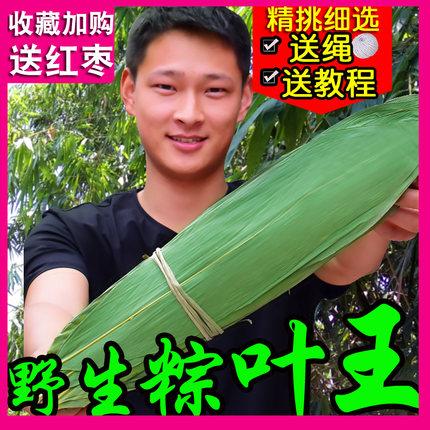 粽叶粽子叶粽粑叶免邮新鲜干大号竹叶包粽子的叶子棕叶竹子芦苇叶