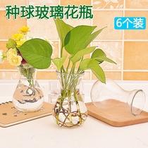 玻璃花瓶透明风信子种球花盆客厅室内鱼缸圆形水培水养植物器皿T