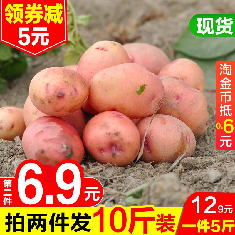 云南红皮迷你小土豆新鲜5/10斤包邮助农产品蔬菜黄心洋芋马铃薯子