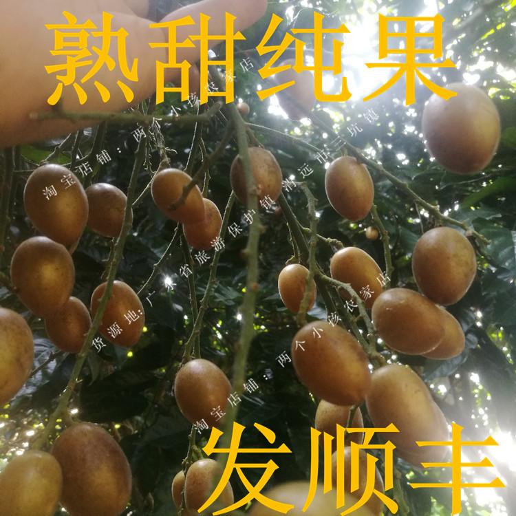 新鲜黄皮 鸡心黄弹子孕妇水果 鸡心黄皮广东特色水果 新鲜水果3斤