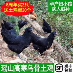 新鲜现杀正宗农家散养五黑鸡乌骨鸡