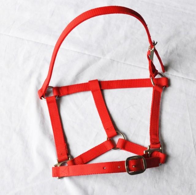 Лошадь Chew сын нейлон лошадь Chew сын новый пастух человек традиция лошадь инструмент полностью магазин
